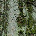 Horn - Grenzstein 63 (5).JPG