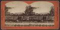Horseshoe Fall from Canada Southern Railway, by Barker, George, 1844-1894.png