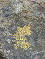How Many Types of Lichen Do You See? (5374803004).jpg