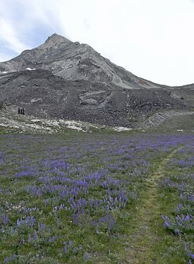 Hyndman Peak and Lupine Field.JPG