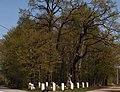 I WW military cemetery 376 Suchoraba, Poland.jpg