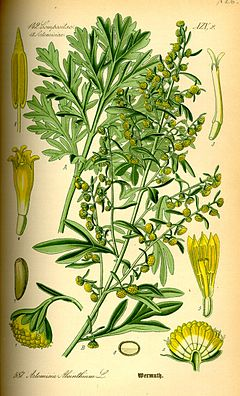 Illustration Artemisia absinthium0