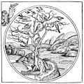Illustrazione albero.jpg