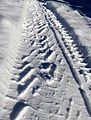 Impression left by snow tire rolling through snow.jpg