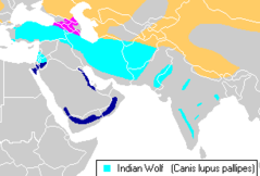 Indian wolf (Canis lupus pallipes) distribution.png