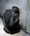 Ishikawa Zoo - Animals - 01 - 2016-04-22.jpg
