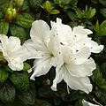 Japanese Gardens Flowers 3.jpg
