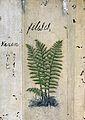 Japanese Herbal, 17th century Wellcome L0030075.jpg