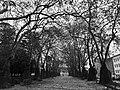 Jardim de João Chagas (39167285321).jpg