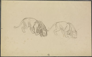 Study of Lions