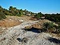 Jekyll Island State Park - panoramio.jpg