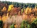 Jesień w okolicy jeziora Turkusowego - panoramio.jpg