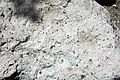 Joe Lott Tuff (Lower Miocene, 19 Ma; Joe Lott Creek Canyon, Tushar Mountains, Utah, USA) 13.jpg