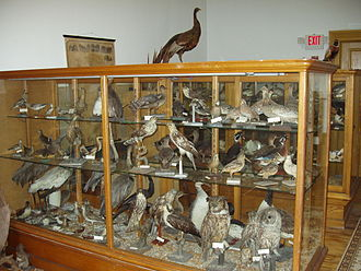 Bartlett Museum, Inc. - Natural History room.