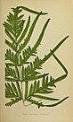 Journal of the Royal Horticultural Society of London (1873) (14577460909).jpg