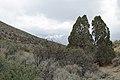 Jumbo Grade Trail - panoramio (69).jpg