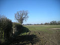 Just an ordinary muddy field - geograph.org.uk - 1746766.jpg