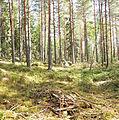 Jyväskylä - forest in Jääskelä.jpg