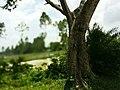 Kahaloo Upazila, Bangladesh - panoramio (5).jpg