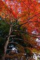 Kameyama Park (2700618442).jpg