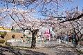 Kamine Park, Ibaraki 02.jpg
