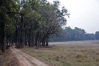 Kanha Jungle.jpg
