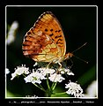 Kelebek Etkisi 006 - panoramio.jpg