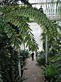 Kew Gardens 0362.JPG