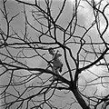 Kind in een boom in het kinderdorp Ben Shemen, Bestanddeelnr 255-0471.jpg
