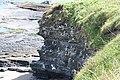 Kittiwakes, Howick - geograph.org.uk - 447107.jpg