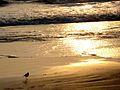 Kizhunna beach Sea waves 2.JPG