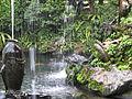 Koi pond (1052736932).jpg