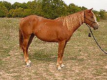 Sorrel Horse Wikipedia