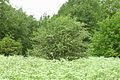 Kreis Pinneberg, Naturschutzgebiet Liether Kalkgrube 08.jpg