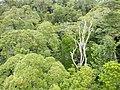Kuranda QLD 4881, Australia - panoramio (43).jpg