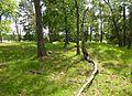 Kyrkkulla gravfält 2012d.jpg