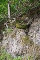 Lügde - 2015-05-29 - LIP-064 (06).jpg