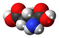 L-Glutamic-acid-3D-spacefill.png