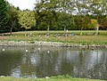 Lady feeding geese at The Friars - geograph.org.uk - 1557719.jpg