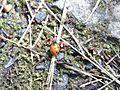 Ladybug by deep.jpg