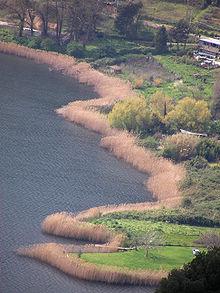 Un tratto di costa del Lago di Nemi.