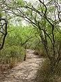 Laguna Atascosa NWR trail (5120922235).jpg