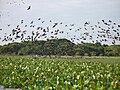 Landschaft in der Llanos-Ebene, Venezuela.JPG