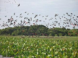 Los Llanos Region, Venezuela