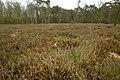 Landschap De Stroopers te Kemzeke - 372076 - onroerenderfgoed.jpg