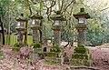Lanterns - Nara Park - Nara, Japan - DSC07493.jpg