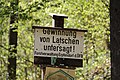 Latschengewinnung, Kirchdorf in Tirol.jpg