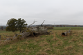 Lauterbach Frischborn Eisenbach Quercus Pastures Coarse woody debris Autumn Baronenweg E 2.png