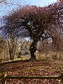 Le Fau de Verzy de Sainte Corneille-P1100052.JPG