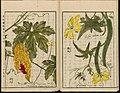 Leiden University Library - Seikei Zusetsu vol. 26, page 023 - 苦瓜 - Momordica charantia L. - 糸瓜 - Luffa cylindrica (L.), 1804.jpg